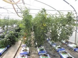 News: Tomaten und Salatgurken